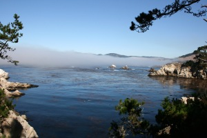 Point Lobos Copyright by Holly Hedman